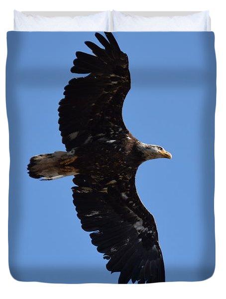 Bald Eagle Juvenile Soaring Duvet Cover