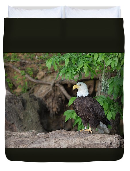 Bald Eagle On Log Duvet Cover
