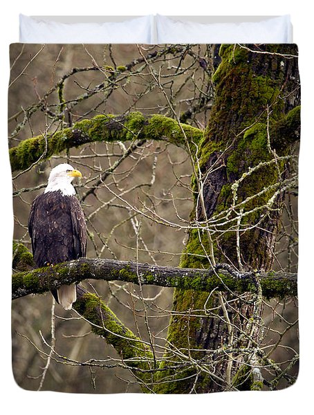 Bald Eagle On Mossy Branch Duvet Cover by Sharon Talson