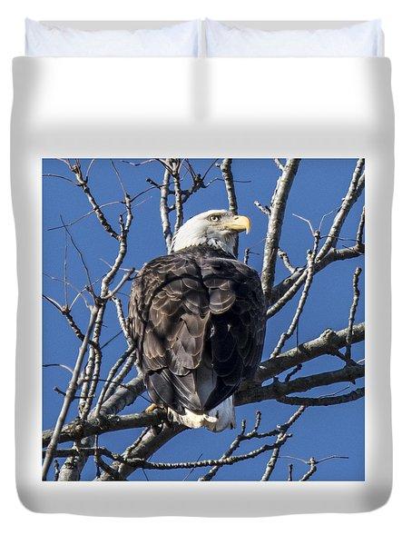 Bald Eagle Perched Duvet Cover