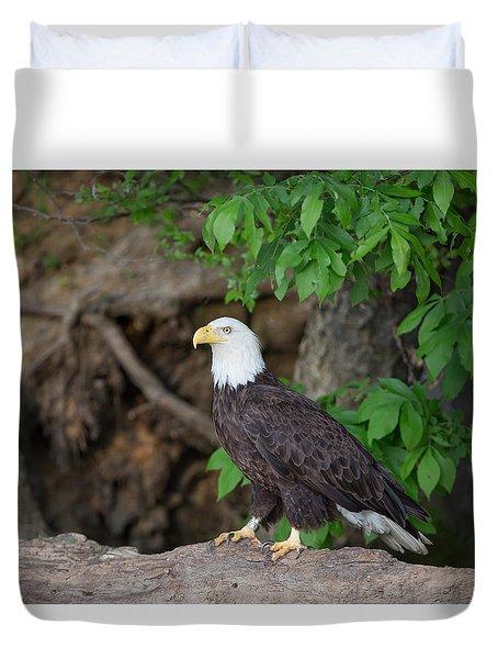 Bald Eagle Standing On Log Duvet Cover