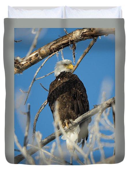 Bald Eagle With Pogo Nip Duvet Cover