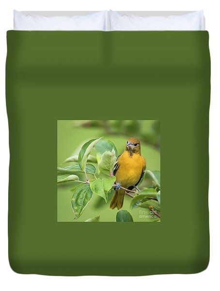 Baltimore Oriole Closeup Duvet Cover by Ricky L Jones