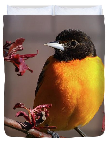 Baltimore Oriole II Duvet Cover