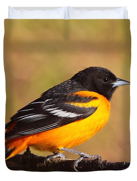 Baltimore Oriole IIi Duvet Cover