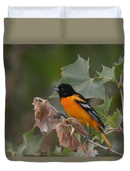 Baltimore Oriole In Sycamore Tree Duvet Cover
