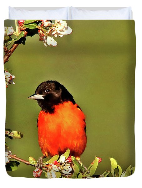 Baltimore Oriole Duvet Cover by James F Towne