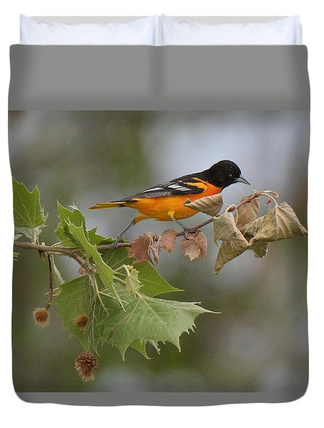 Baltimore Oriole Out On A Limb Duvet Cover