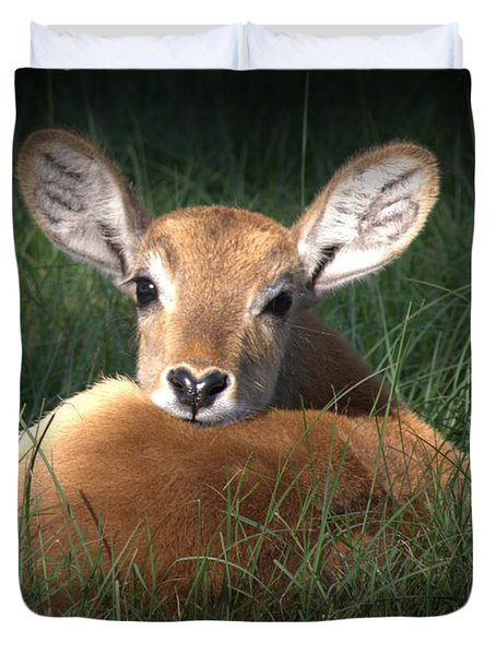 Duvet Cover featuring the photograph Bambi by Kim Henderson