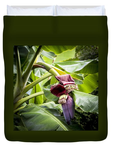 Duvet Cover featuring the photograph Banana Beginnings Square by Kerri Ligatich