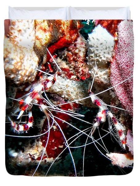 Duvet Cover featuring the photograph Banded Coral Shrimp - Caught In The Act by Amy McDaniel