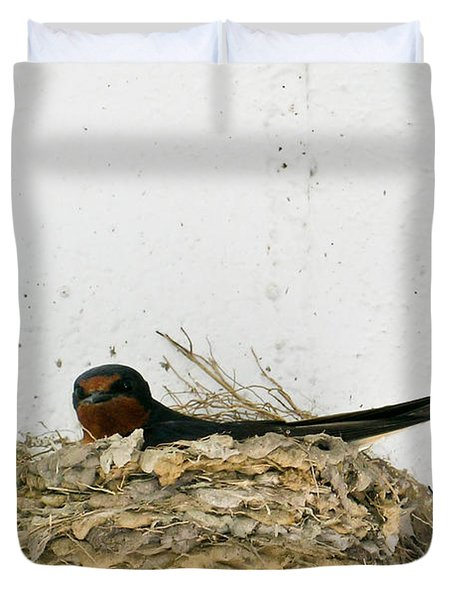 Barn Swallow Nesting Duvet Cover by Douglas Barnett