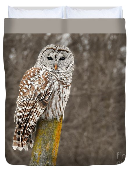 Barred Owl Duvet Cover by Kathy M Krause