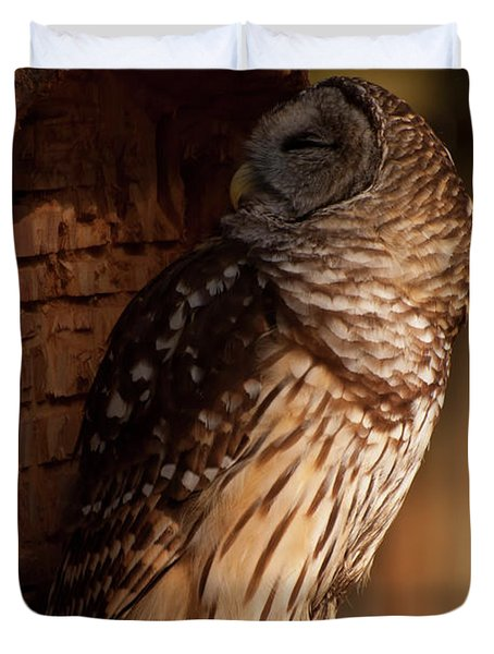 Duvet Cover featuring the digital art Barred Owl Sleeping In A Tree by Chris Flees