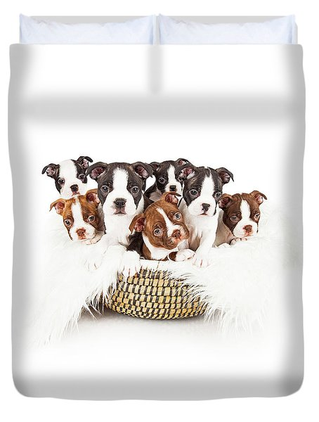 Basket Of Boston Terrier Puppies Duvet Cover