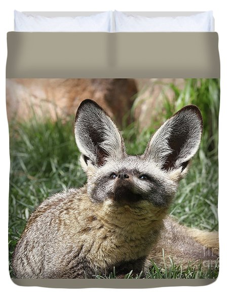 Bat-eared Fox Duvet Cover