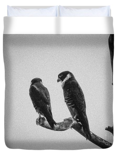 Bat Falcon In Black And White Duvet Cover