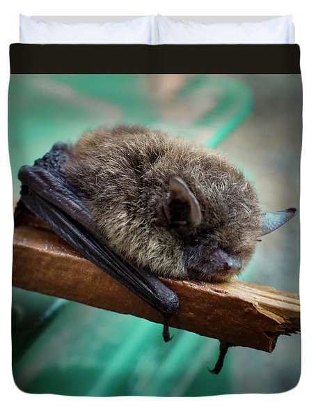 Duvet Cover featuring the photograph Bat Rehoused by Jean Noren