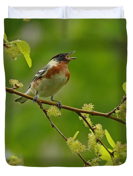 Bay-breasted Warbler Duvet Cover