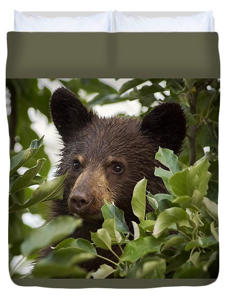 Bear Cub In Apple Tree6 Duvet Cover