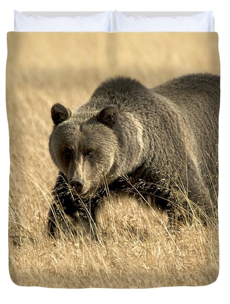Bear On The Prowl Duvet Cover