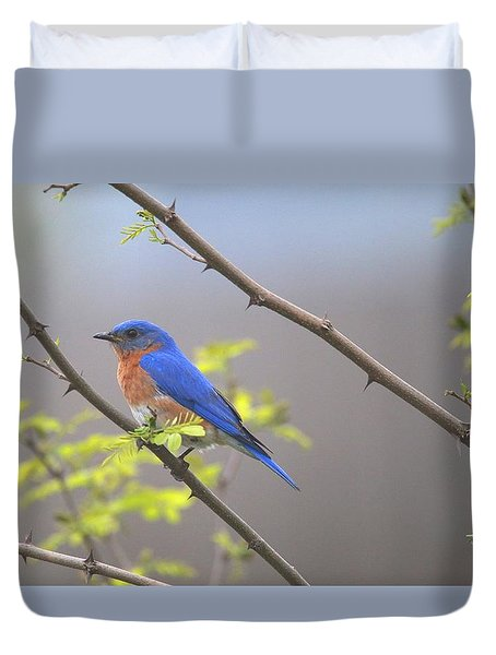 Beautiful Eastern Bluebird Duvet Cover