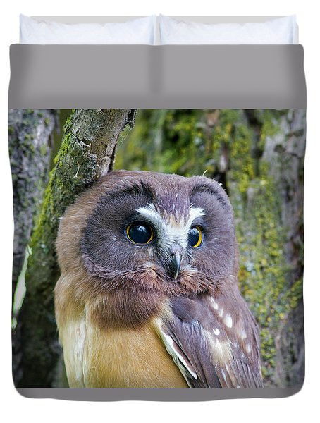 Beautiful Eyes Of A Saw-whet Owl Chick Duvet Cover