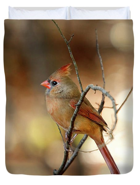 Duvet Cover featuring the photograph Beautiful Female Cardinal by Darren Fisher