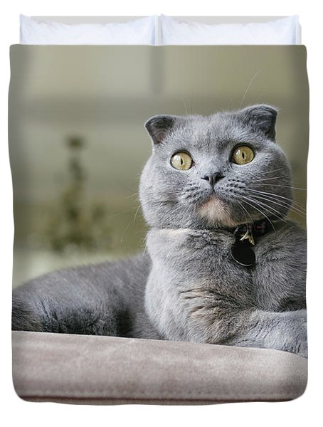 Beautiful Grey Scottish Fold Cat Lounges On Couch Duvet Cover