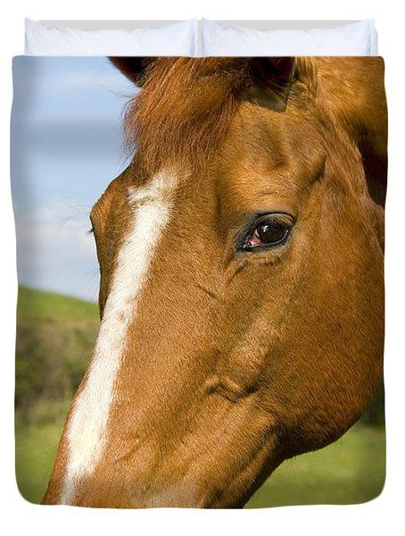 Beautiful Horse Portrait Duvet Cover by Meirion Matthias