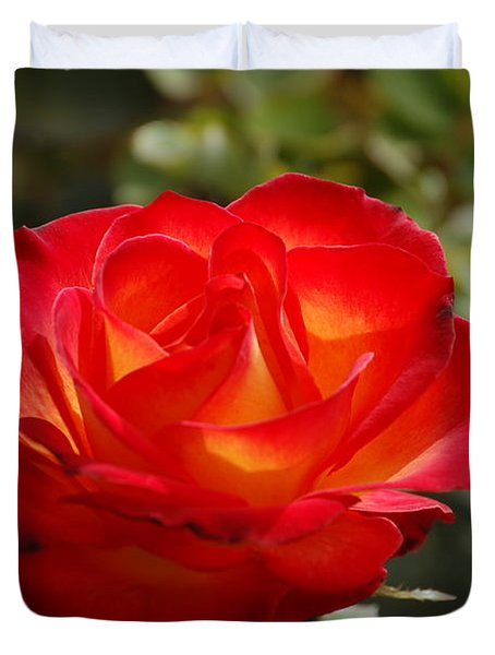 Beautiful Rose Duvet Cover
