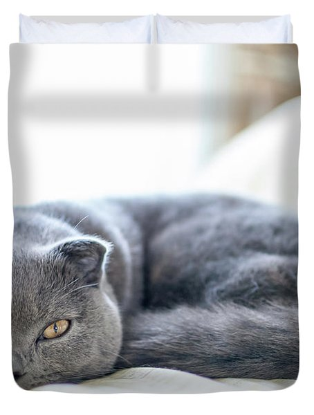 Beautiful Scottish Fold Cat Curled Up On Bed Duvet Cover