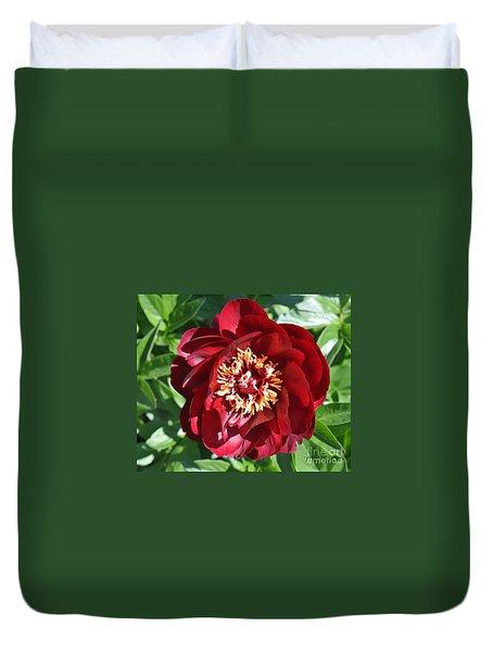 Beauty Peony Bloom Duvet Cover by Marsha Heiken
