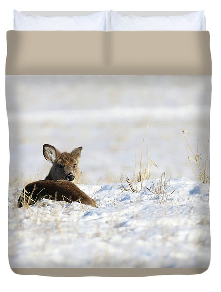 Bedded Fawn In Snowy Field Duvet Cover