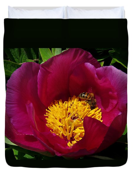 Bee On A Burgundy And Yellow Flower3 Duvet Cover
