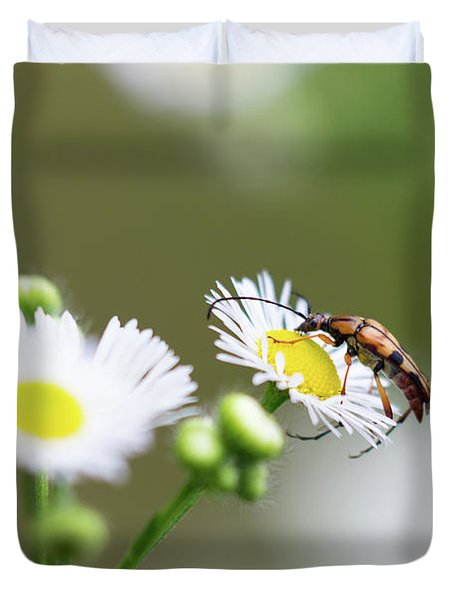 Beetle Daisy Duvet Cover