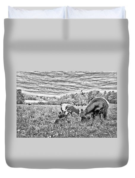 Belted Galloway Beef Cattle Duvet Cover