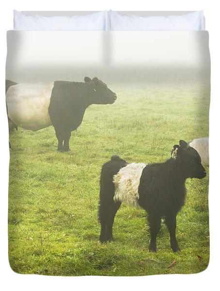 Belted Galloway Cows Grazing  In Foggy Farm Field Maine Duvet Cover