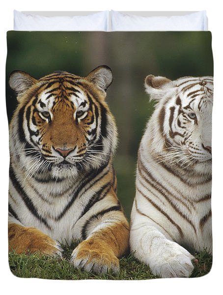 Duvet Cover featuring the photograph Bengal Tiger Team by Konrad Wothe