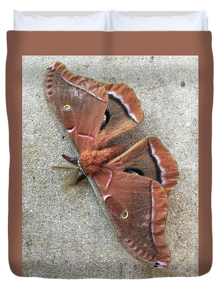 Big Beautiful Silk Moth Duvet Cover