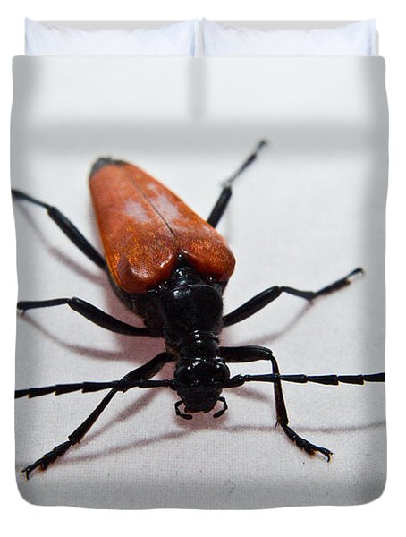 Big Beetle Duvet Cover
