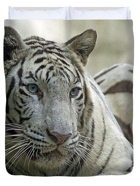 Big Cats 117 Duvet Cover