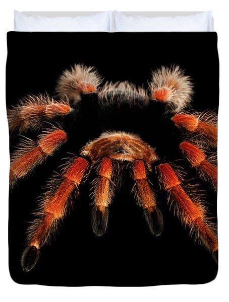 Big Hairy Tarantula Theraphosidae Isolated On Black Background Duvet Cover