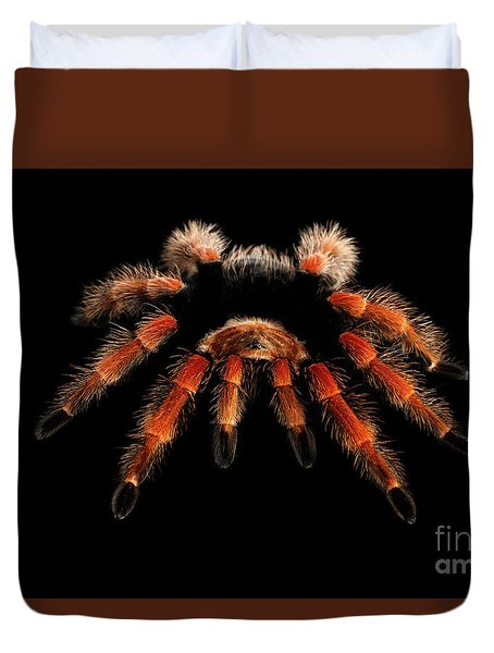 Big Hairy Tarantula Theraphosidae Isolated On Black Background Duvet Cover