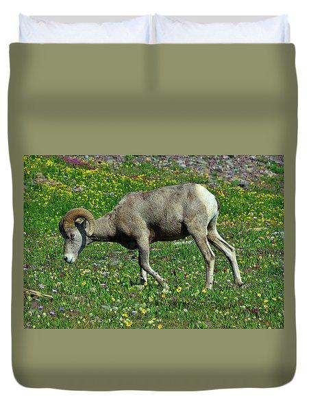 Big Horn Ram Eating Flowers In Glacier National Park Duvet Cover