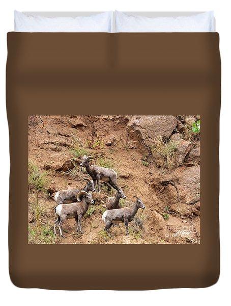 Big Horn Sheep Family Duvet Cover