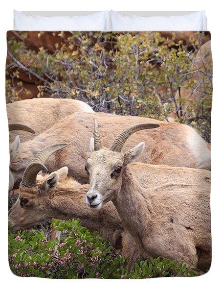 Big Horn Sheep Duvet Cover