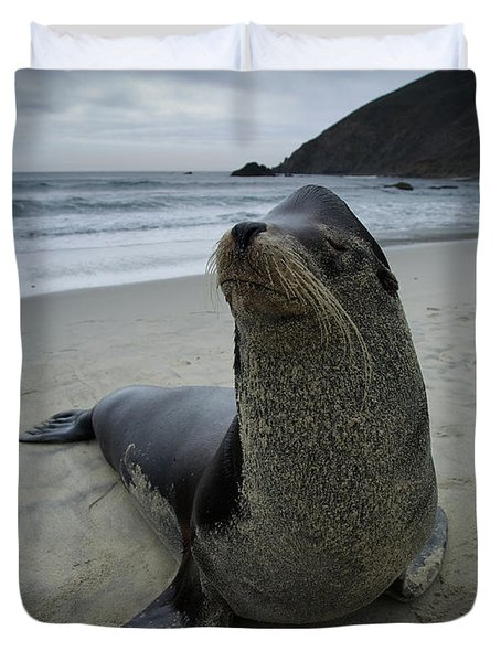 Big Seal Duvet Cover