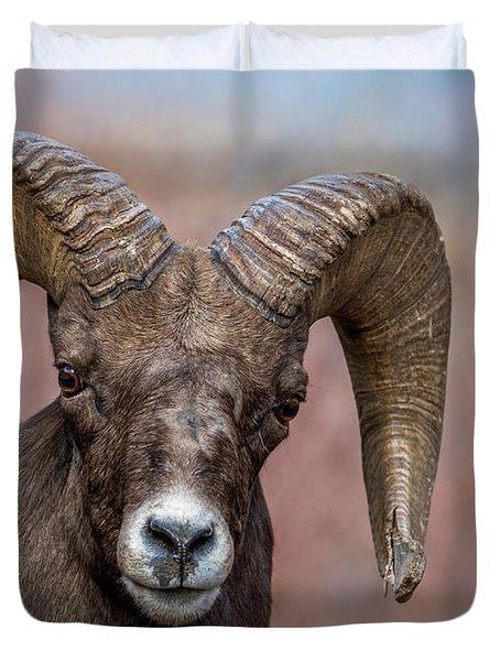 Bighorn Portrait Duvet Cover
