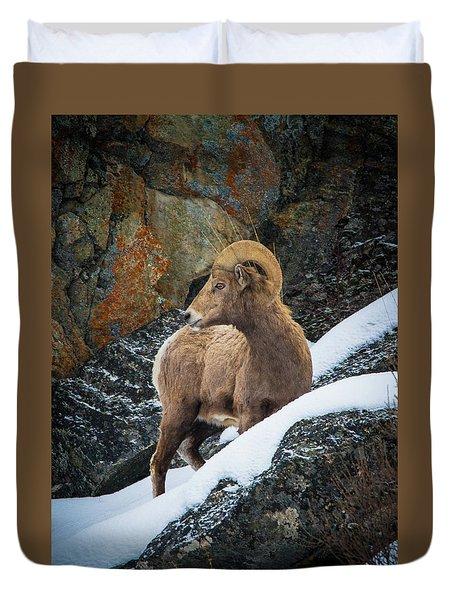 Bighorn Ram 1 Duvet Cover